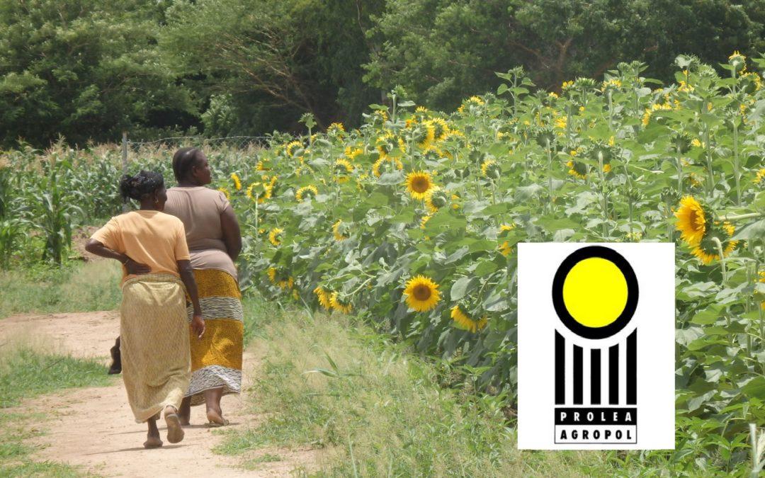 Humanitalents recrute pour le compte de AGROPOL un.e Responsable de Programme Afrique
